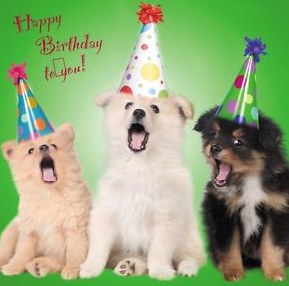 Collection Of The Best Happy Birthday Wishes For Brother NOEL DOGS SHIRT